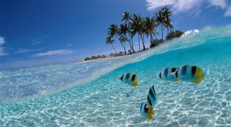 Fakta-Fakta Menarik Wisata Taman Laut Bunaken Manado